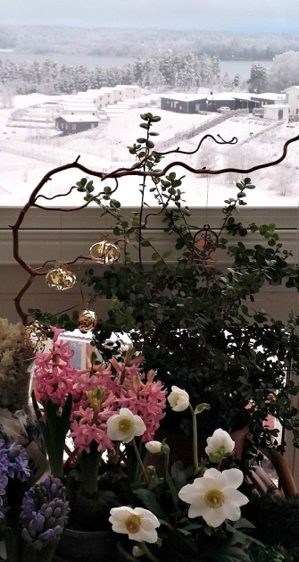 Julblommor på inglasad balkong