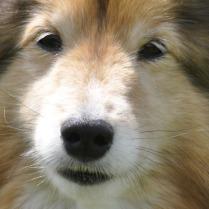 dog-82676_1280