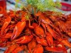 crayfish-767685_1920