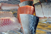 fresh-fish-3680401_1920