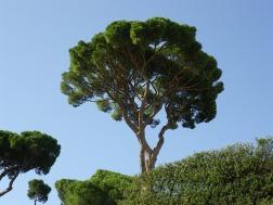 trees-1263290_640