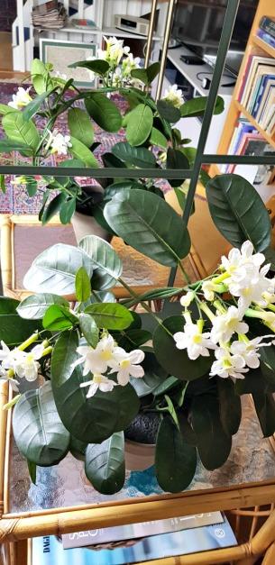 Blommor blir dubblerade framför en spegel