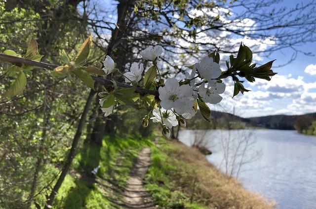 spring-3363136_640