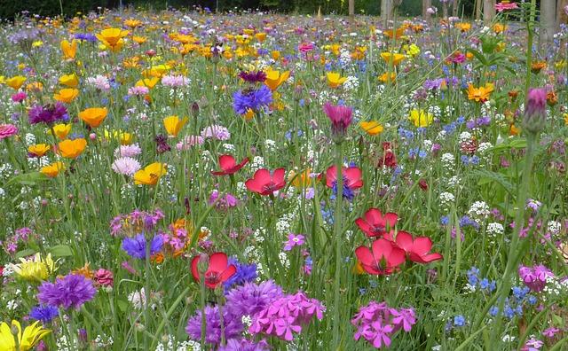 flower-meadow-175110_640