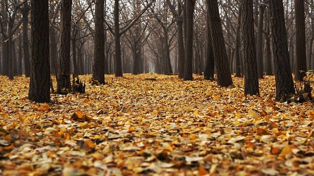 autumn-1869426_640
