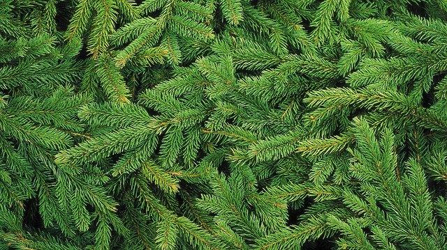 christmas-tree-1954838_640