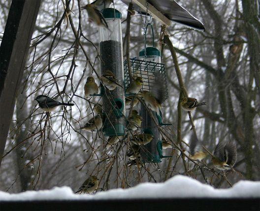 800px-Busy_birdfeeders