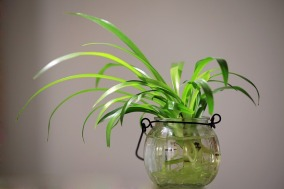 potted-plants-582820_640