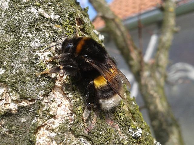 bumble-bee-101419_640